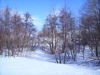 Тюльганский район