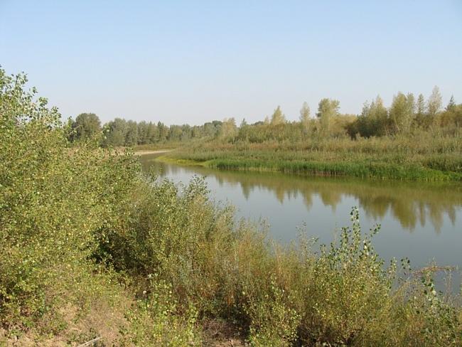 клев прогноз в илеке оренбургской области