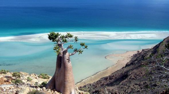 Остров Сокотра 3
