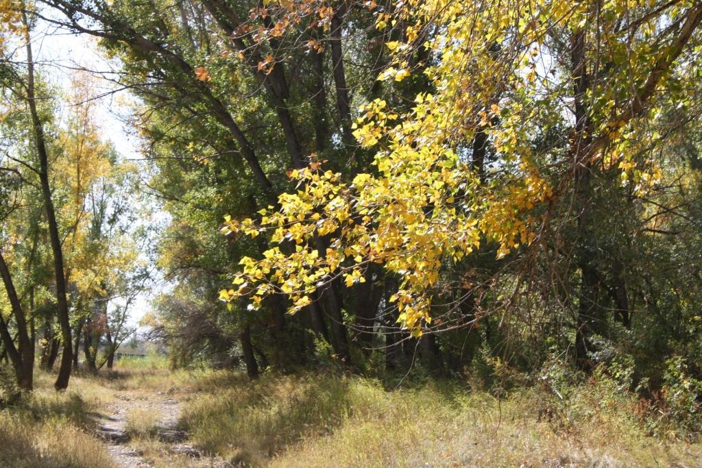 фотосессия осенью фото