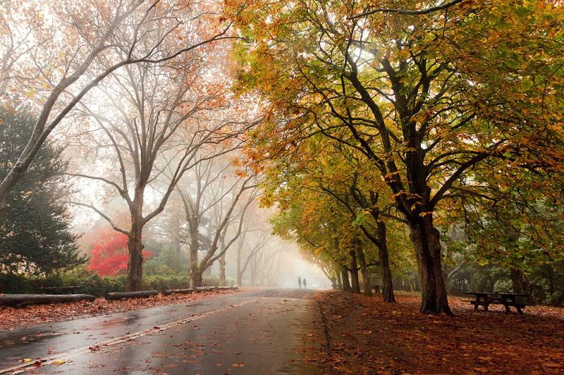 красивая осень картинки фото
