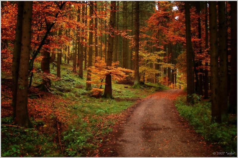 осень листья фото