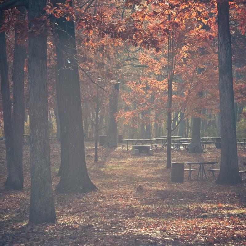 осень в лесу фото