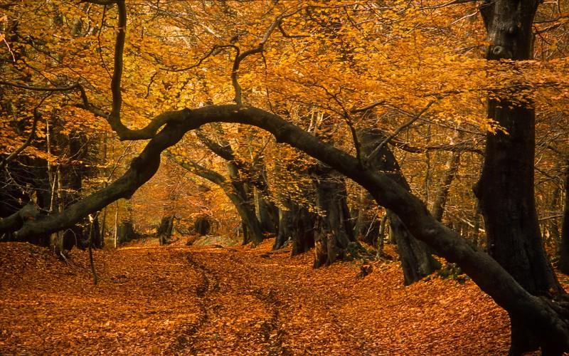 подделки на тему осень своими руками фото