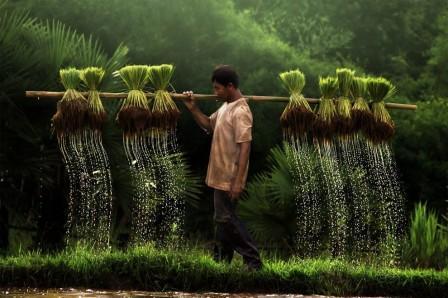 A farmer, Vietnam
