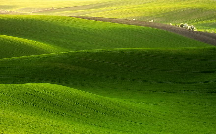 Moravian Fields 12