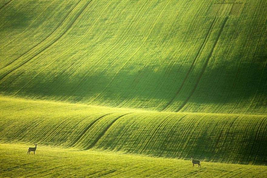 Moravian Fields 3