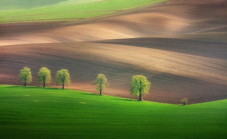 Moravian Fields 4