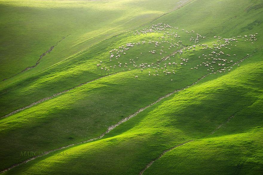 Moravian Fields 6
