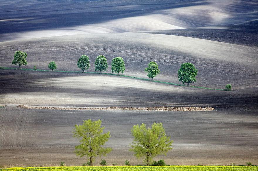 Moravian Fields 7