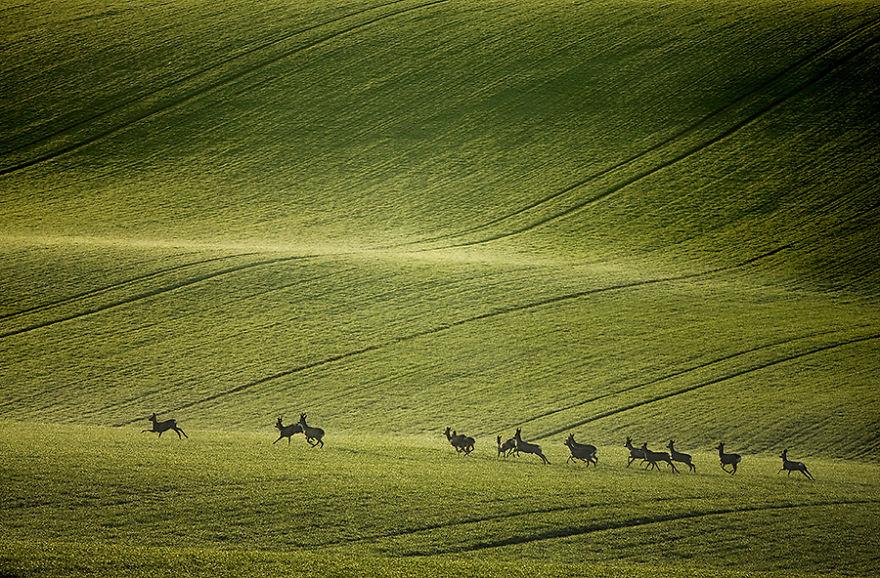 Moravian Fields 8