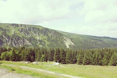 альпийские луга и торфяники