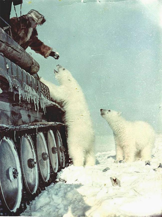 белый медведь питание