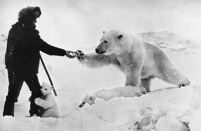 Фото медведя и тимати
