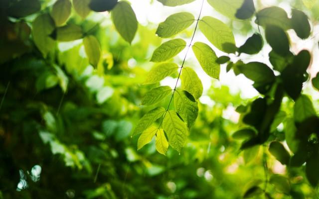 Красивые листья