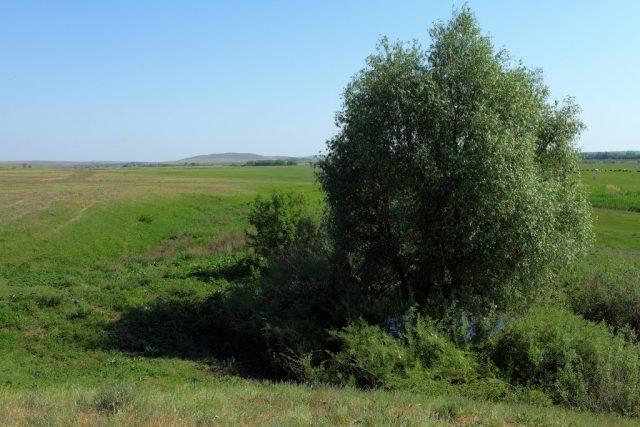 речка Елшанка